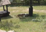 济南野生动物园一日游_章丘动物园_野生动物园
