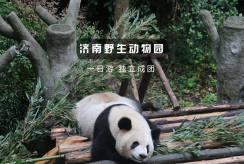 章丘动物园_野生动物园